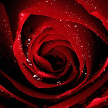 Co o nás říkají barvy – Červená