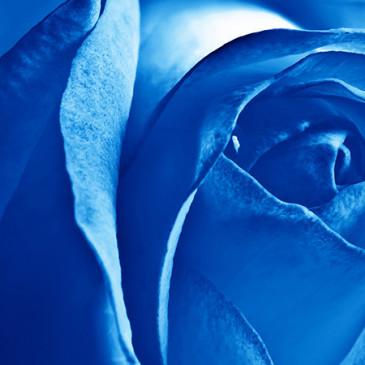 Co o nás říkají barvy – Modrá