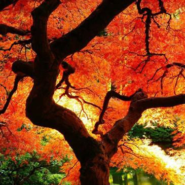Co o nás říkají barvy – Oranžová