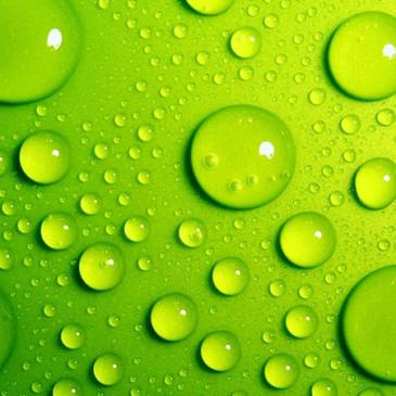 Co o nás říkají barvy – Zelená